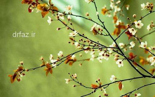 بهار توصیه های طب سنتی