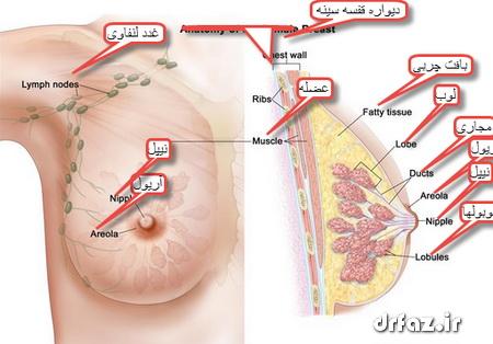 بادکش پستان زیبایی قاعدگی شدید خون دماغ