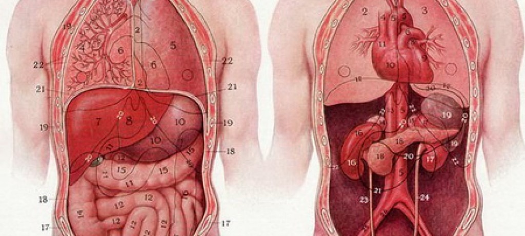 بادکش شکم درمان چاقی یبوست تکرر ادرار