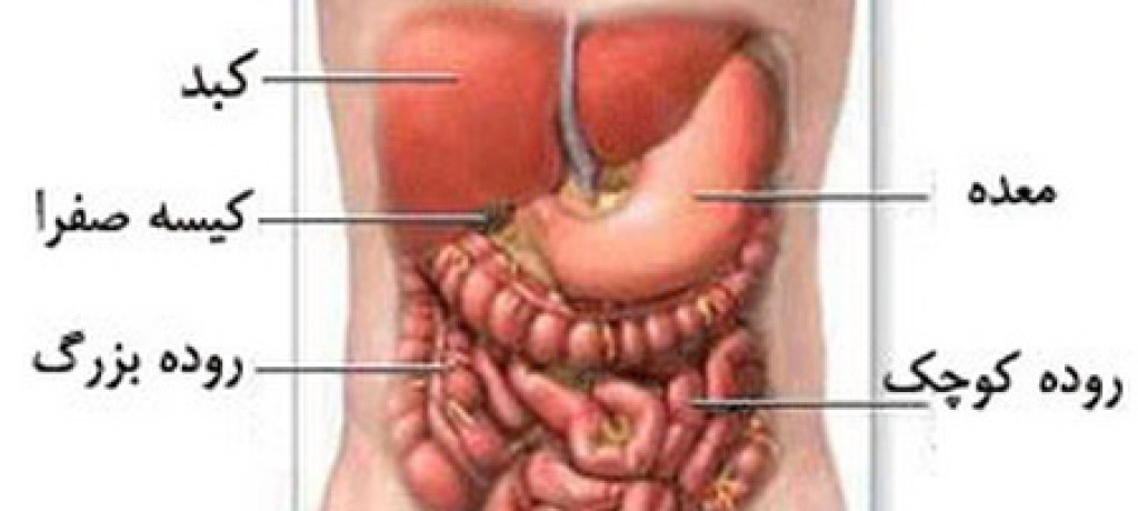 بادکش کبد درمان ھپاتیت تنظیم آنزیم سرطان التهاب کیسه صفرا